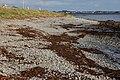 The shore at Ratallagh near Portavogie - geograph.org.uk - 295419.jpg