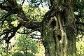 Tree - Jufukuji - Kamakura, Kanagawa, Japan - DSC07979.JPG