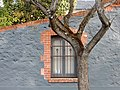 Tree Outside North Adelaide Cottage (20991405592).jpg