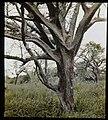 Tree and vegetation (3948760570).jpg