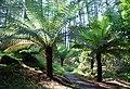 Tree fern gully, Arduaine Gardens - geograph.org.uk - 1362153.jpg