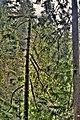 Trees Capilano Park Vancouver British Columbia Canada 07.jpg
