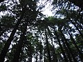 Trees along the Avalanche Lake Trail (4460550200).jpg