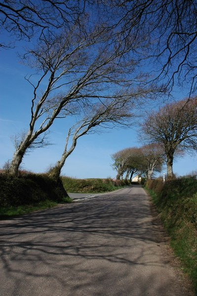 File:Trees near Silworthy Cross - geograph.org.uk - 411224.jpg
