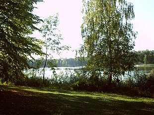 Trees near lake.jpg