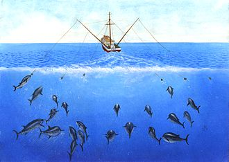 Trolling (fishing) - Artist's conception of tuna trolling operation, using outriggers to tow multiple trolling lines and give the appearance of schooling fish