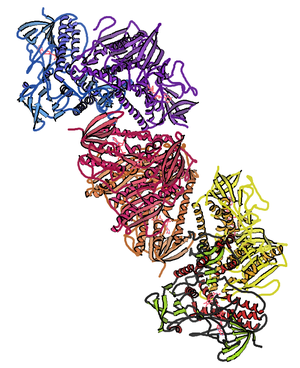 Thioredoxin reductase - Image: Trx R