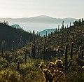 Tucson - panoramio.jpg