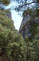 Turkish pine trees, Canyon Kapıkaya 12.jpg