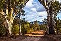 Twin Gums, Flinders Ranges - South Australia (Explored).jpg