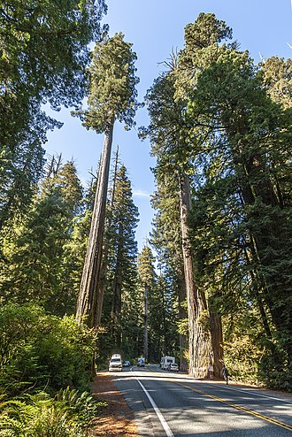 U.S. Route 199 - Simpson-Reed redwood grove in Jedediah Smith State Park, along US 199 near Crescent City, California