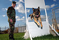 US Navy 021113-N-0780F-002 Patrol dog obstacle course.jpg