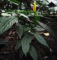 UnbekannteTropenpflanze.jpg