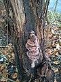 Unknown mushroom (03).jpg