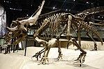 Utahceratops gettyi 4 salt lake city.jpg