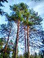 Valdaysky District, Novgorod Oblast, Russia - panoramio (3478).jpg