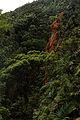 Vegetación Cerro Santa Ana.jpg