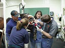 Vet Students Clinical Training 2006-08.jpg
