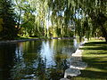 Victoria Park river.JPG