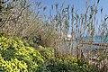 Vieste - panoramio (40).jpg