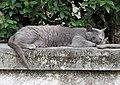 Villino coppini, fi, gatto che dorme.JPG