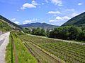 Vineyard in the Wachau, near Spitz, Niederösterreich, Austria. - panoramio (1).jpg