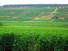 Vineyards vosne-Romanée2.jpg