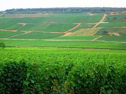 Vineyards in Vosne-Romanée in Burgundy, a village that is the source of some of France's most expensive and sought-after wines.