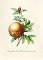 Vintage Flower illustration by Pierre-Joseph Redouté, digitally enhanced by rawpixel 97.jpg