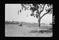 Vintage activities at Richon-le-Zion, Aug. 1939. Richon-le-Zion. Gen(eral). Distant view LOC matpc.19793.jpg