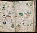 Voynich Manuscript (163).jpg
