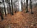 Waldpfad bei Altertheim 2.jpg