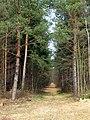 Waldweg - geo.hlipp.de - 3093.jpg