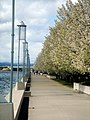Walkway by the water - Lake Burley Griffin (248986903).jpg