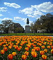 Washington Circle and tulips.JPG