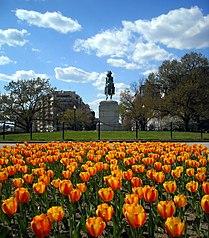 Washington Circle and tulips.JPG