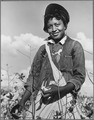 Washington County, Mississippi. Delta-Pine Land Company. (African-American woman) picking cotton on Delta land that... - NARA - 512796.tif