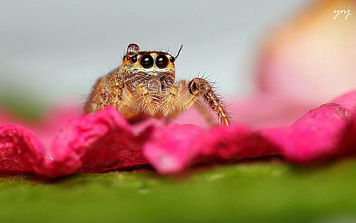 Water Drop and also a jumping spider! (9291534974)