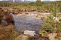 Water vole conservation project, Allt a Mharcaidh - geograph.org.uk - 1774911.jpg