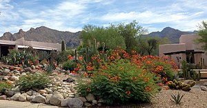 Casas Adobes, Arizona - Westward Look Resort garden, 2014