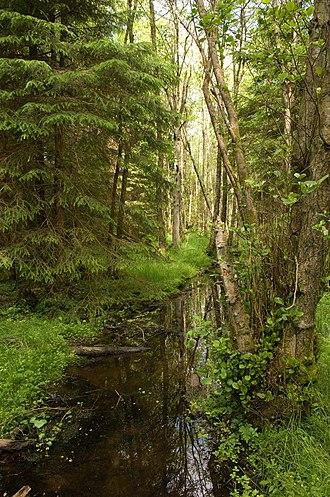 Native Woodland Survey of Scotland - Wet woodland joining a conifer plantation