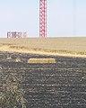 Wheat field near Sapir college firebombe kite damage 508.jpg