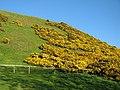 Whins, North Berwick Law - geograph.org.uk - 1316004.jpg