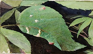 White Birch Leaf Edge Caterpillar, study for book Concealing Coloration in the Animal Kingdom