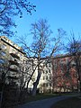 Wiener Naturdenkmal 620- Bergahorn (Döbling) c.JPG