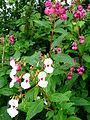 Wild grown flowers 2.JPG