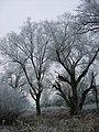Winterimpressionen-rauhreif-2008-017.jpg