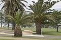 Wollongong - panoramio (4).jpg