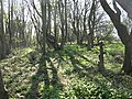 Woodland, Bilsdean - geograph.org.uk - 1274963.jpg