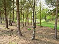 Woodland, Dedridge - geograph.org.uk - 166763.jpg